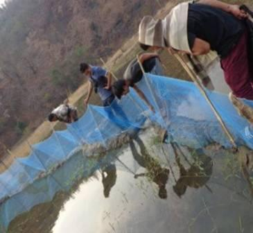 A Fish Farm Leading to Youth Development