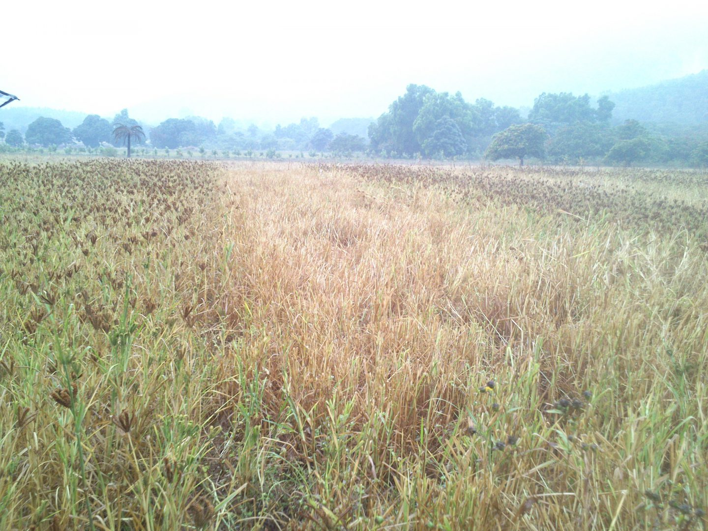 Improved Agricultural Practices