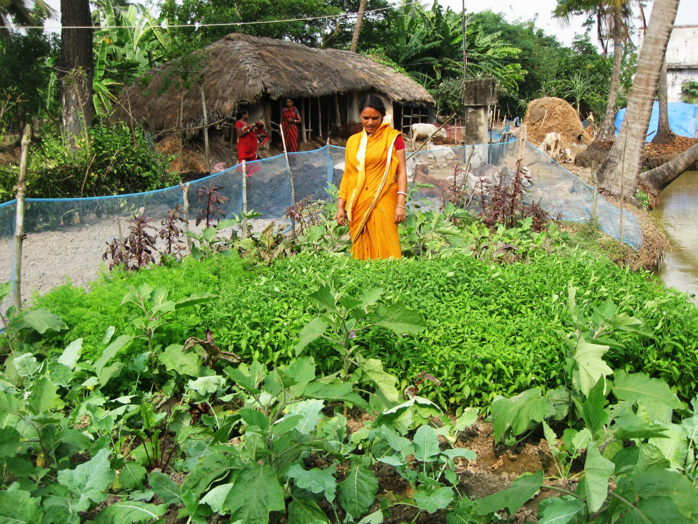 Nutrition Garden Improving Food Security